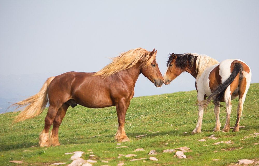 summer-horses_278226623